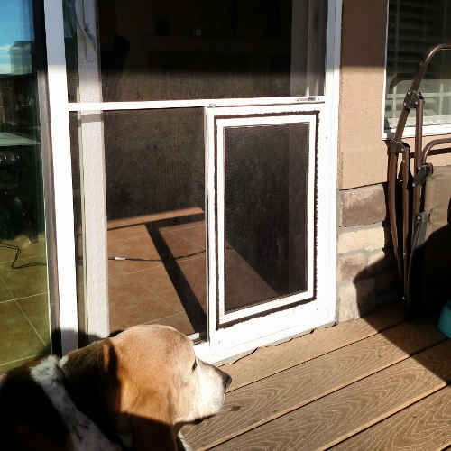 Sliding glass patio dog door